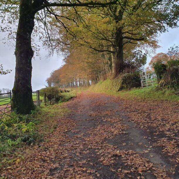 Autumn Shedding in Moylagh