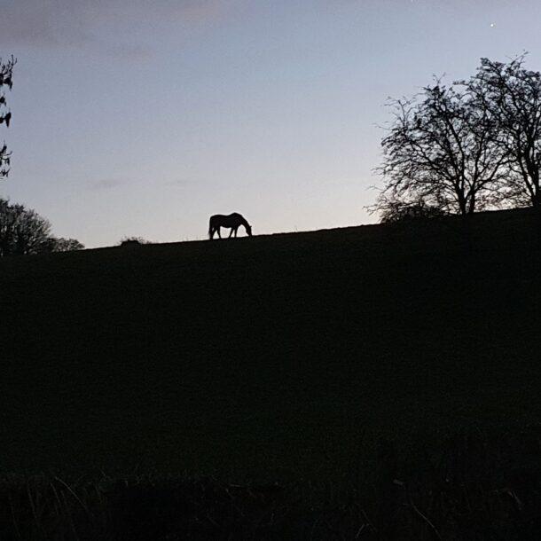 Horse in Stillness