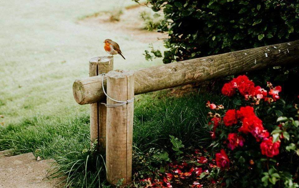 Robin Image_Deirdre Rusk Photography
